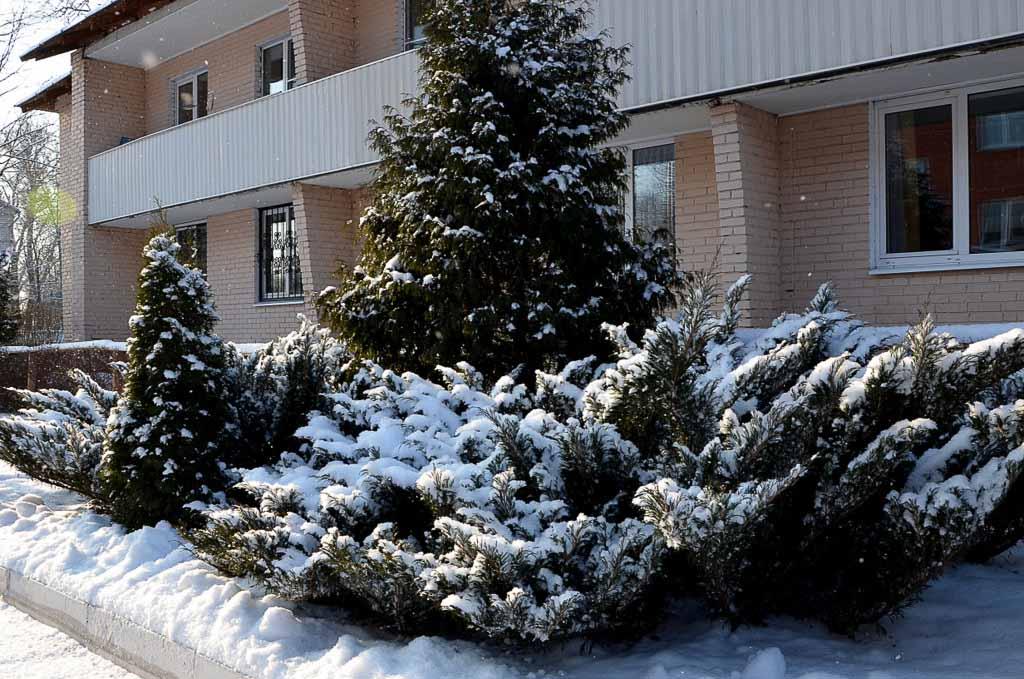 Рождество Христово 2016 года в Черкизовском психоневрологическом интернате