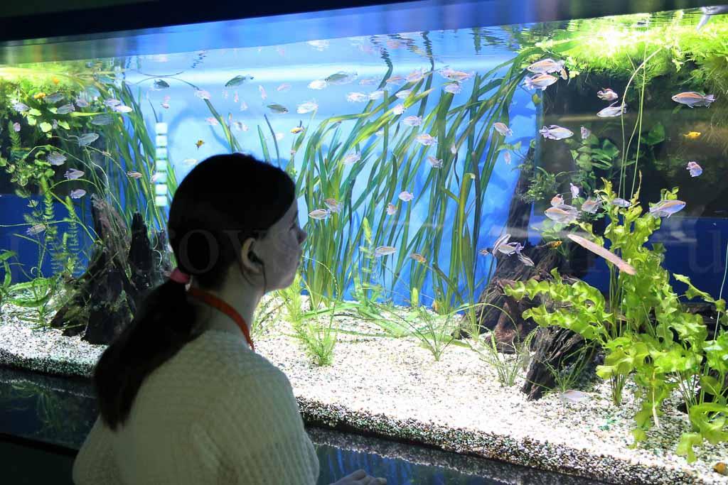 Воспитанники Коломенского интерната для детей-сирот в Центре океанографии и морской биологии «Москвариум» 23 марта 2016 года
